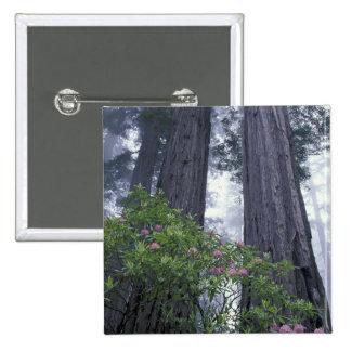 NA, los E.E.U.U., California. Parque de estado de  Pin Cuadrado