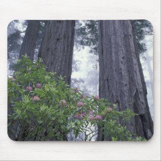 NA, los E.E.U.U., California. Parque de estado de  Alfombrillas De Ratones