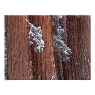 NA, los E.E.U.U., California. Parque nacional de s Impresion Fotografica