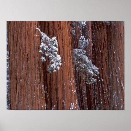 NA, los E.E.U.U., California. Parque nacional de s Póster
