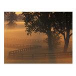 NA, los E.E.U.U., Kentucky. Salida del sol de nieb Postal