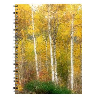 NA, los E.E.U.U., Washington, árboles de Aspen de  Cuaderno