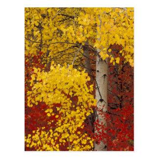 NA, los E.E.U.U., Washington, bosque nacional de W Tarjetas Postales