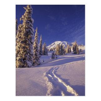 NA, los E.E.U.U., Washington, el Monte Rainier NP, Tarjeta Postal