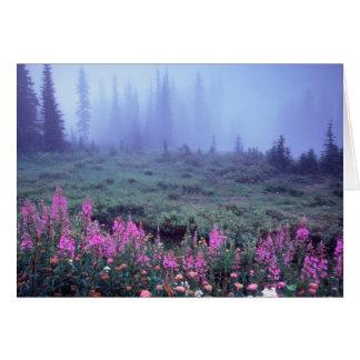 NA, los E.E.U.U., Washington, prado alpino de nieb Tarjeta De Felicitación