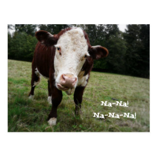 Na Na! Funny Cow Sticks Out Tongue Postcard