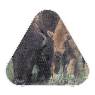 NA, parque nacional de los E.E.U.U., Wyoming, Altavoz Bluetooth