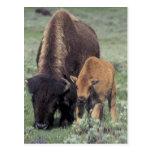 NA, parque nacional de los E.E.U.U., Wyoming, Tarjetas Postales