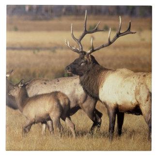 NA, parque nacional de los E.E.U.U., Wyoming, Yell Azulejos Cerámicos