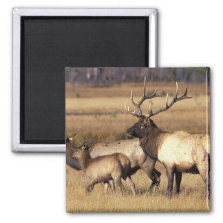 NA, parque nacional de los E.E.U.U., Wyoming, Yell Imán Cuadrado