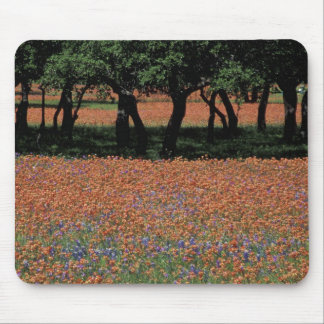 NA, Texas, Texas Hill Country, Buchan Dam, Mouse Pad