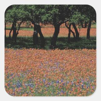 NA, Texas, Texas Hill Country, Buchan Dam, Stickers