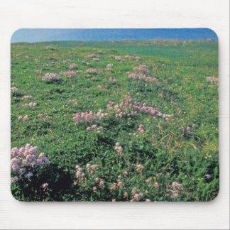 NA, USA, Alaska, Aleutian Island, Scenic with Mousepad