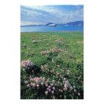 NA, USA, Alaska, Aleutian Island, Scenic with Photo Print