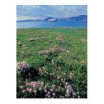 NA, USA, Alaska, Aleutian Island, Scenic with Postcard