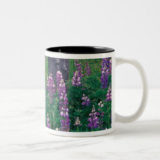 NA, USA, Alaska, Aleutian Islands, Unalaska, Two-Tone Coffee Mug