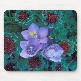 NA, USA, Alaska, Aleutian Islands, Wildflowers 2 Mousepad