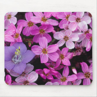 NA, USA, Alaska, Aleutian Islands, Wildflowers Mouse Pad