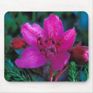NA, USA, Alaska, Aleutian Islands, Wildflowers Mousepad