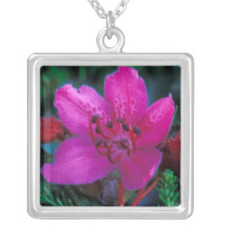 NA, USA, Alaska, Aleutian Islands, Wildflowers Silver Plated Necklace