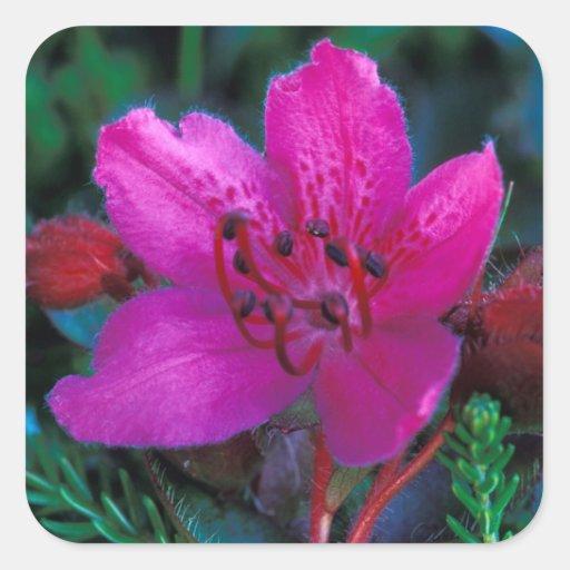 NA, USA, Alaska, Aleutian Islands, Wildflowers Square Sticker