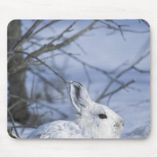 NA, USA, Alaska. Arctic National Wildlife Mouse Pad