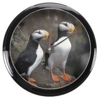 NA, USA, Alaska, Bering Sea, Pribilofs, St. 2 Aquarium Clocks