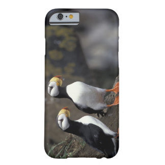 NA, USA, Alaska, Bering Sea, Pribilofs, St. 2 Barely There iPhone 6 Case