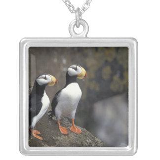 NA, USA, Alaska, Bering Sea, Pribilofs, St. 2 Custom Necklace