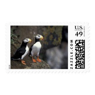 NA USA Alaska Bering Sea Pribilofs St 2 Postage Stamp