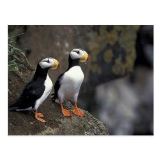 NA, USA, Alaska, Bering Sea, Pribilofs, St. 2 Postcard
