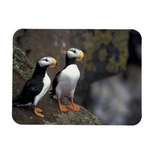 NA, USA, Alaska, Bering Sea, Pribilofs, St. 2 Magnets