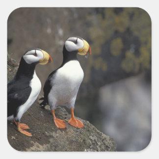 NA, USA, Alaska, Bering Sea, Pribilofs, St. 2 Square Sticker