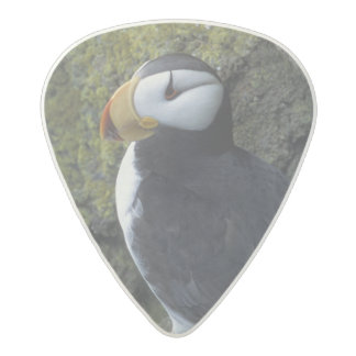 NA, USA, Alaska, Bering Sea, Pribilofs, St. Acetal Guitar Pick