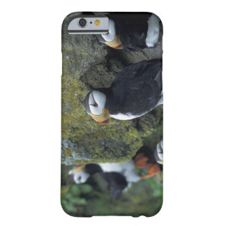 NA, USA, Alaska, Bering Sea, Pribilofs, St. Barely There iPhone 6 Case