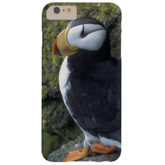 NA, USA, Alaska, Bering Sea, Pribilofs, St. Barely There iPhone 6 Plus Case