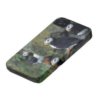 NA, USA, Alaska, Bering Sea, Pribilofs, St. iPhone 4 Covers