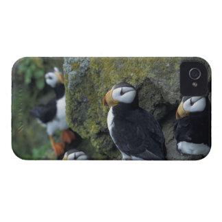 NA, USA, Alaska, Bering Sea, Pribilofs, St. iPhone 4 Case-Mate Cases