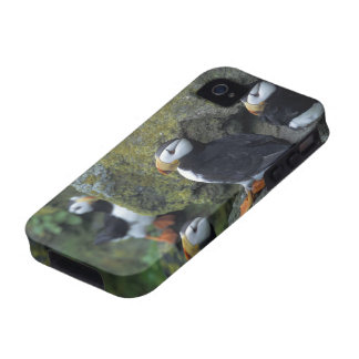 NA, USA, Alaska, Bering Sea, Pribilofs, St. Case-Mate iPhone 4 Cases