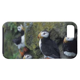 NA, USA, Alaska, Bering Sea, Pribilofs, St. iPhone 5 Covers