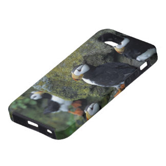 NA, USA, Alaska, Bering Sea, Pribilofs, St. iPhone 5 Case