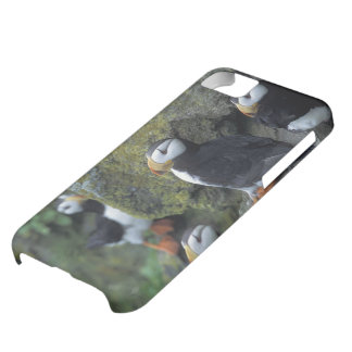 NA, USA, Alaska, Bering Sea, Pribilofs, St. Cover For iPhone 5C