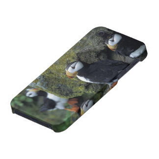 NA, USA, Alaska, Bering Sea, Pribilofs, St. Cover For iPhone SE/5/5s