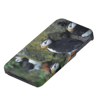 NA, USA, Alaska, Bering Sea, Pribilofs, St. iPhone 4 Cover
