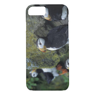 NA, USA, Alaska, Bering Sea, Pribilofs, St. iPhone 8/7 Case