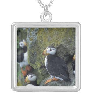 NA, USA, Alaska, Bering Sea, Pribilofs, St. Custom Necklace