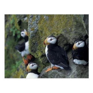 NA, USA, Alaska, Bering Sea, Pribilofs, St. Postcard