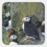 NA, USA, Alaska, Bering Sea, Pribilofs, St. Sticker