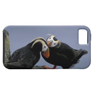 NA, USA, Alaska, Bering Sea, Pribilofs. Tufted iPhone SE/5/5s Case
