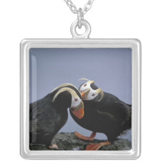 NA, USA, Alaska, Bering Sea, Pribilofs. Tufted Custom Necklace